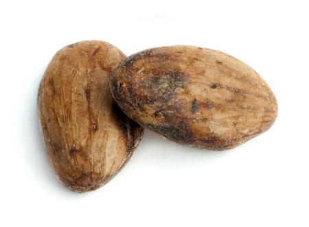 cikolata: Cocoa beans close up. White isolated