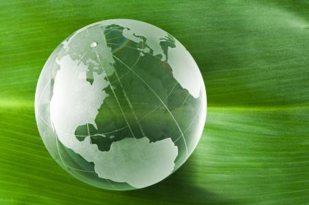 Glass globe on green leaf photo
