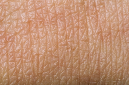 soft skin: Human skin close up. Structure of Skin