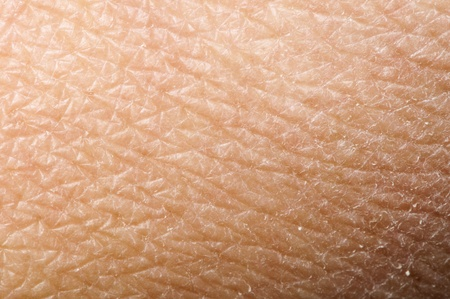 DERMATOLOGY: Human skin close up. Structure of Skin