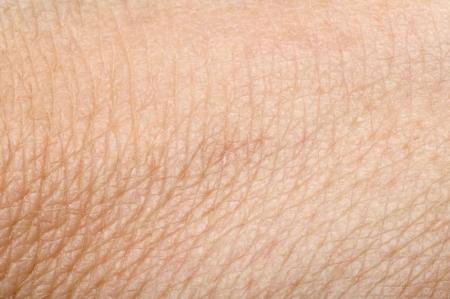 La piel humana de cerca. Estructura de la Piel