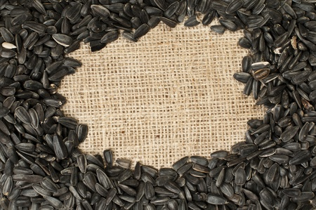 Sunflower seed on burlap brown background Stock Photo - 17268176
