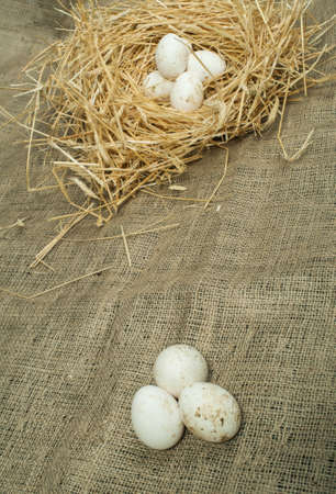 Organic white eggs from domestic farm. Eggs in a straw nest photo