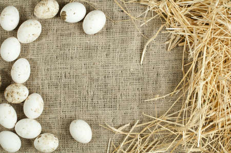 Organic white eggs on sackcloth and straw. Copy space  photo
