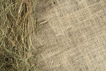 Hay on burlap and copy space. Studio shot. photo