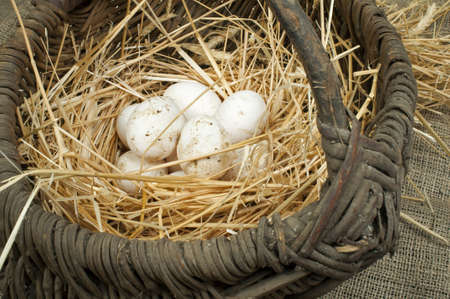 Organic white eggs from domestic farm. Eggs in vintage basket. photo