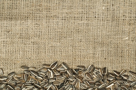 Closeup raw sunflower seeds on burlap. Arranged as border Stock Photo - 17516223