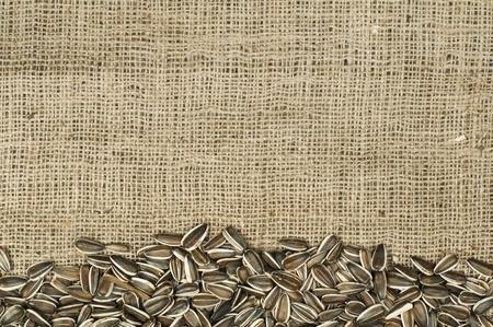 Closeup raw sunflower seeds on burlap. Arranged as border Stock Photo - 17516223