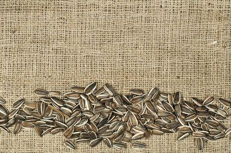 Closeup raw sunflower seeds on burlap. Arranged as border Stock Photo - 17516221