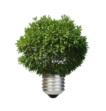 eco friendly: Lamp made  of green tree. Ecology conception. Blue sky.
