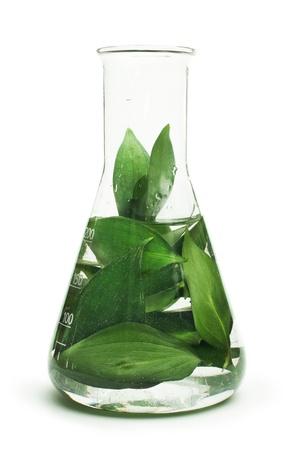 Groene planten in het laboratorium apparatuur op witte achtergrond