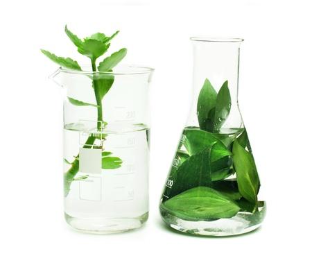 experimento: Las plantas verdes en equipos de laboratorio en el fondo blanco Foto de archivo