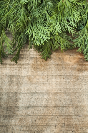 Wood and fir branches background. Leafs border Stock Photo - 17824121