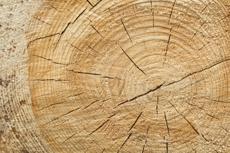 Background of split wood. Close up wood texture photo