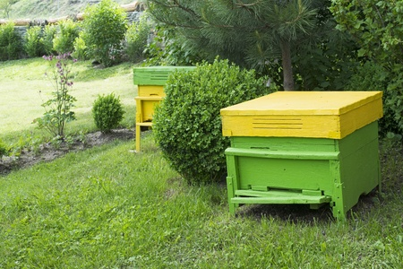 Yellow beehives located on the green lawn photo
