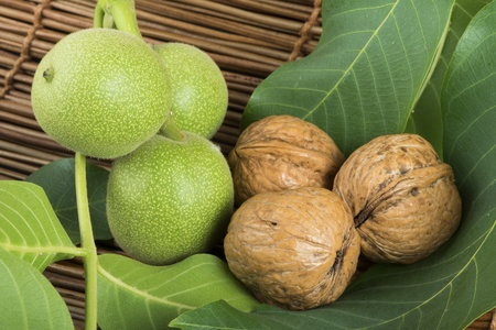 Green and ripe walnuts. Walnut leaves photo