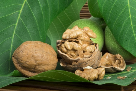 Green and ripe walnuts photo