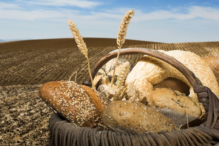 Bread and wheat cereal crops. Plowed land photo