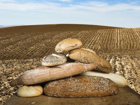 Pan y cereales de trigo. Tierra arada Foto de archivo - 20498167