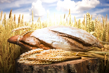 Brood en tarwe granen. Graangewassen op de achtergrond