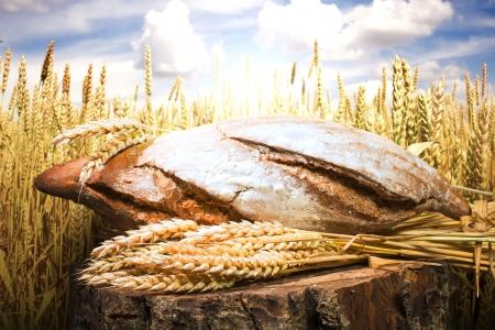 harina: Pan y del trigo los cultivos de cereales. Cultivos Cereales en el fondo