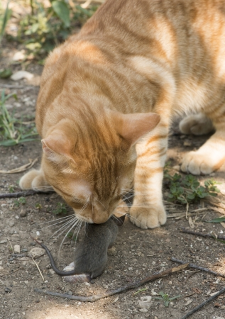 Cat and mouse in garden. Cat catching mouse photo
