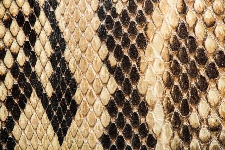 текстура змеиной кожи: