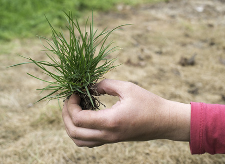 Hand holding turf grass and earth photo
