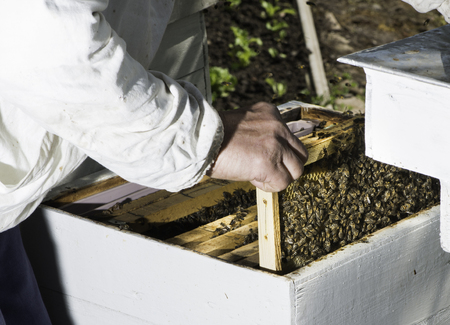 Beekeeper look honeycombs. White protective clothing photo