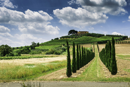 Vineyards and farm road in Tuscany, Italy. photo