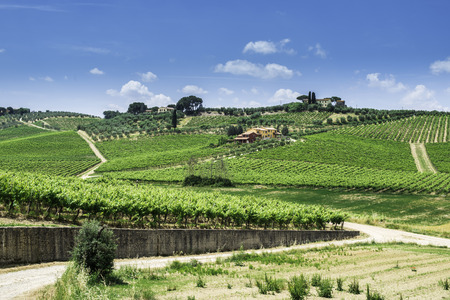 Vine plantations and farmhouse in Toscana, Italy.