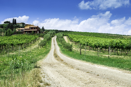Vineyards and farm road in Toscana, Italy. photo