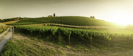 Vineyards in Tuscany. Farm house at sunset. Panoramic view