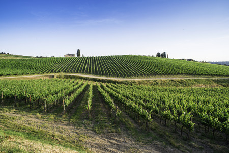 Vineyards in Tuscany. Farm house.