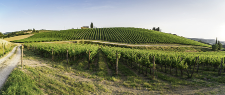 Vineyards in Tuscany. Farm house.Panoramic view Stock Photo