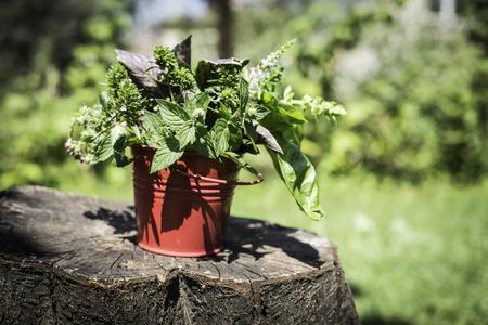 garden green: Fresh herbs in garden. Green meadow