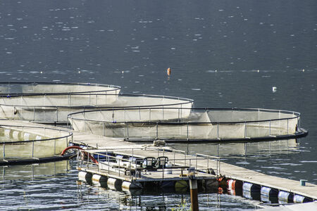 salmon fishery: Cages for fish farming in lake