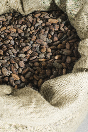 Hand holds cocoa beans in a bag photo