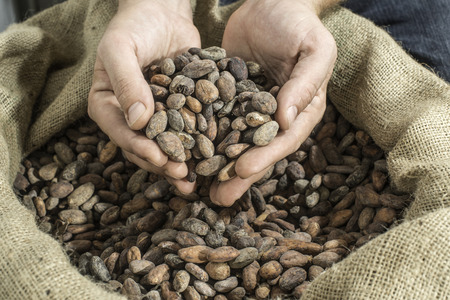 Hand holds cocoa beans in a bag