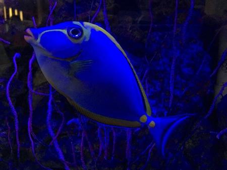 neon fish: Algae and fish aquarium in darkness. Neon light Stock Photo