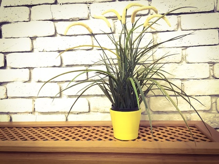 interior: Home flower in front of white brick wall Stock Photo