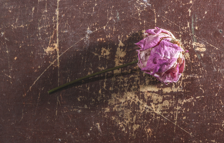 withered flower: Withered flower on wooden background