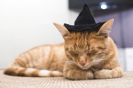black cap: Orange cat with black cap