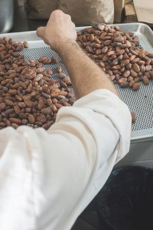 manually: Hands select cocoa beans manually