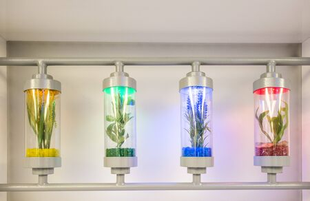 grown: Plants grown in test tubes in laboratory Stock Photo