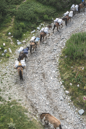 laden: Horses laden with baggage climb the mountain trail. Mountain lift. Summer time. Stock Photo