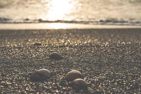 clams: Clams on the beach. Gibraltar