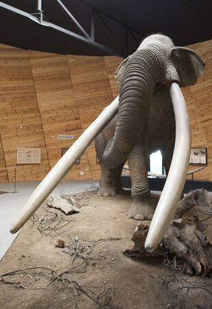 woolly: Model of mastodon in real stature. Stock Photo