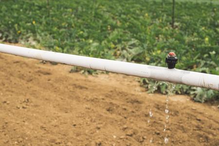 Immagini Stock Irrigazione Zucchine Campo Agricoltura