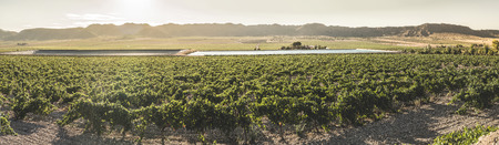 Vineyards at sunset and irrigation canal. Stock Photo